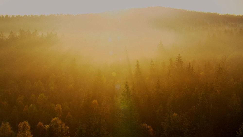 07-Dawn-Forest-WEB.jpg
