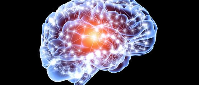 neurobrain.jpg