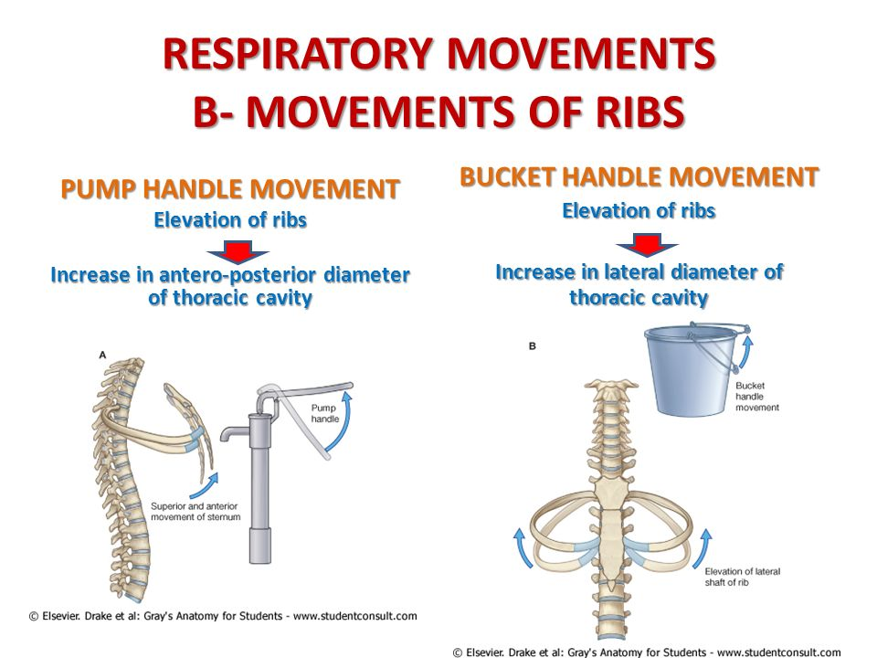 Getting A Handle On Our Ribs — Hands On Therapeutics