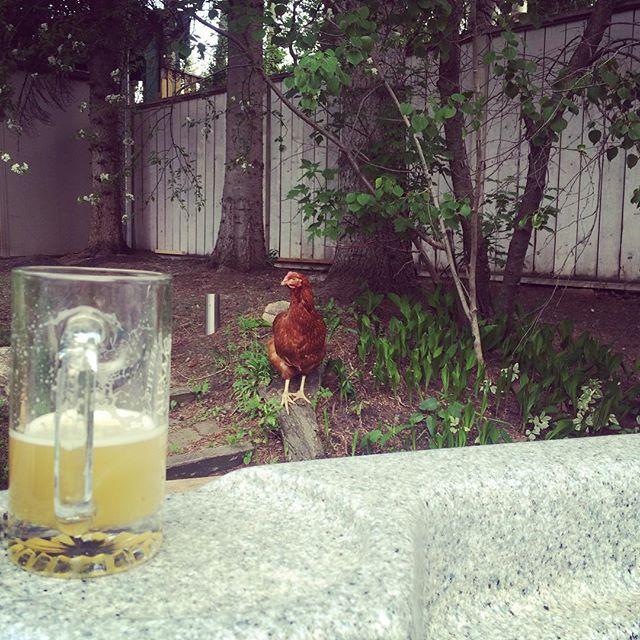 Hey Robyn are you excited for backyard chickens again this spring?#robynissoluckytohaveme#chickenandbeer#hottubbin