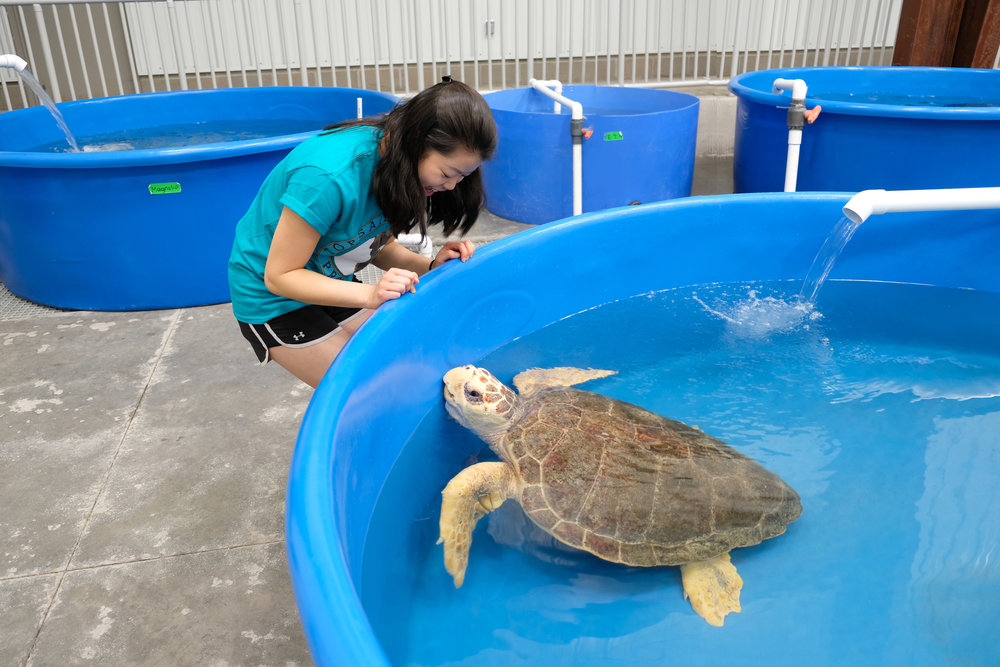 Nicole Moy at the Terps Helping Turtles alternative spring break.