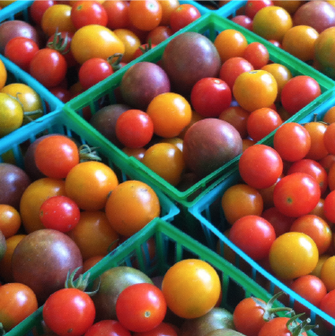 Grow Dat Youth Farm Tomatos