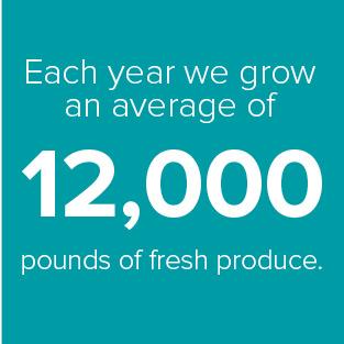 Grow Dat Urban Farm Produce