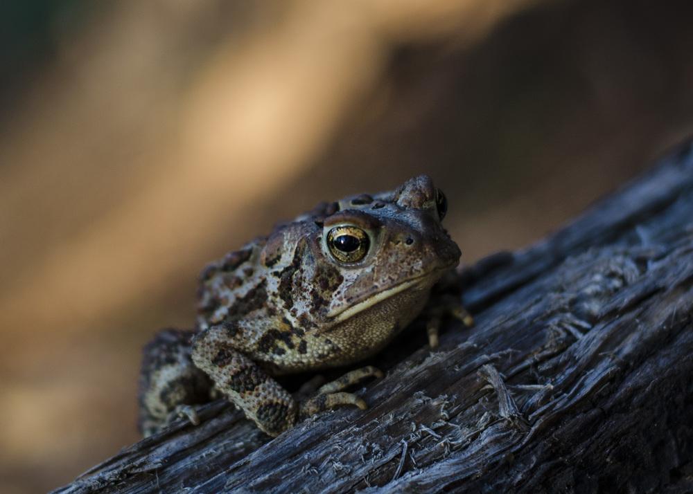 Toad_1.jpg