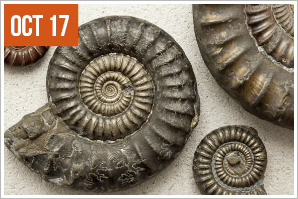 National Fossil Day - Held during Earth Science Week (Oct 14-20), this day underscores the importance of fossils in relation to our understanding of our world.