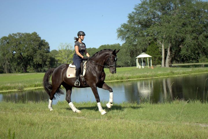 highlander canter by pond.jpg