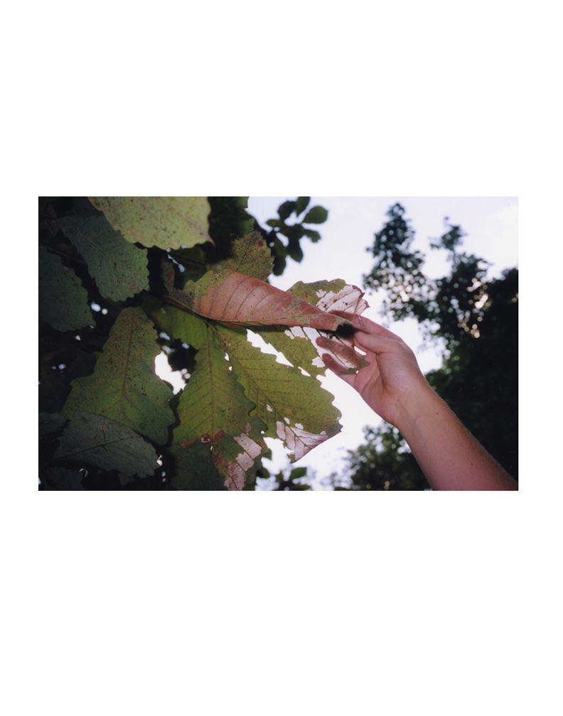 hand leaf.jpg