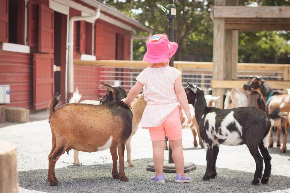 Zoo Farm