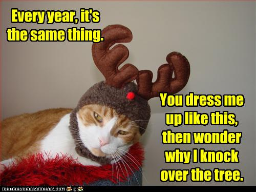 cat thankful.jpg