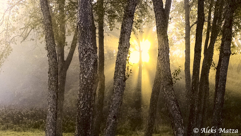 Forest Sunrise 2.jpg