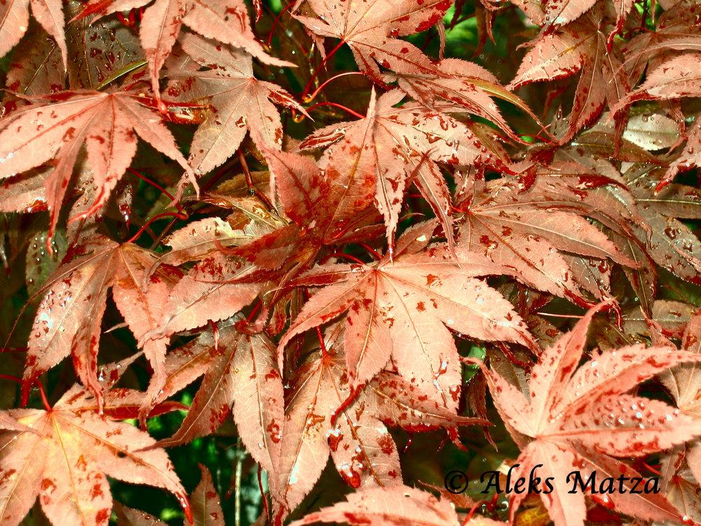 Leaves 2.jpg