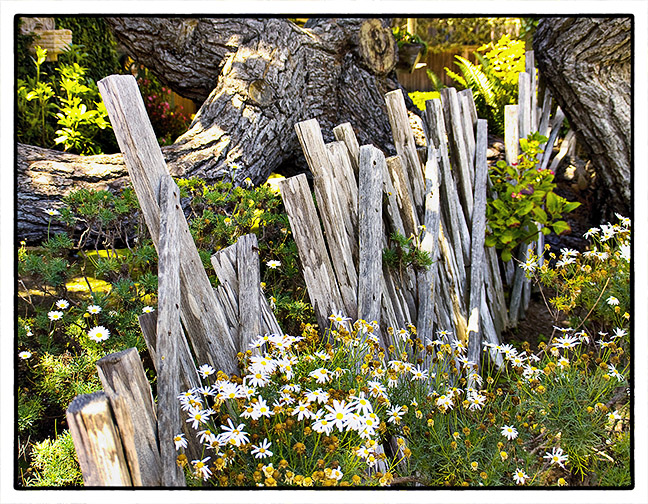 Crooked Fence with Flowers