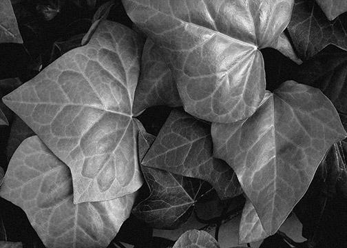 Raw Leaves