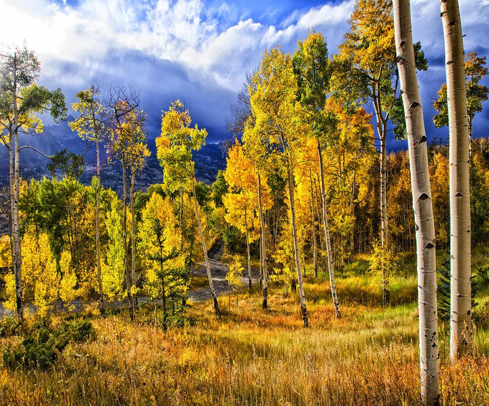 Colorado Vision