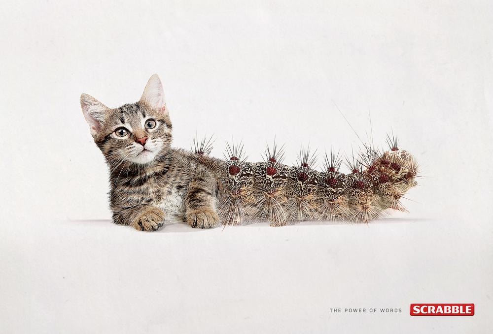Cat-Erpillar.jpg