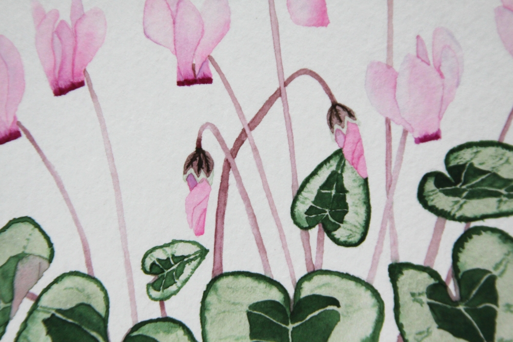 pink cyclamen bud and flower detail painting by anne buterajpg