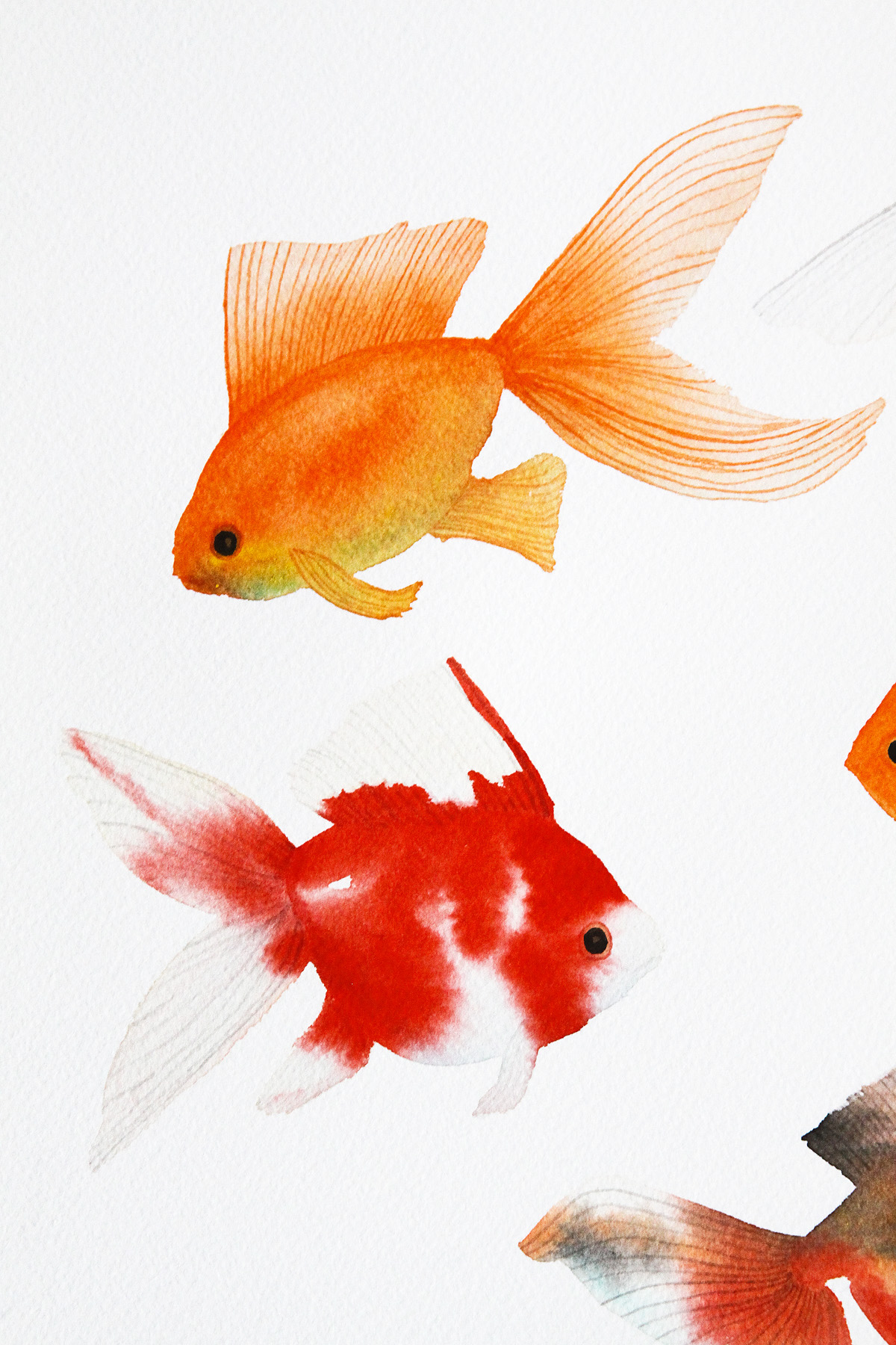 Watercolor Goldfish — My Giant Strawberry