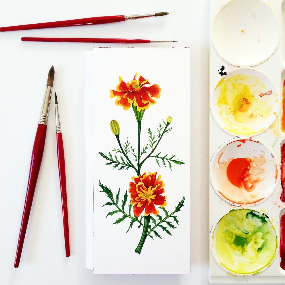 Watercolor Marigolds by Anne Butera