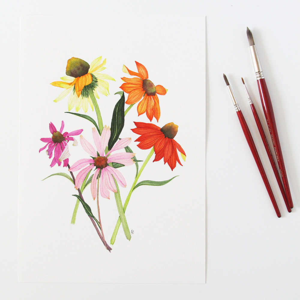 Colorful Coneflowers Botanical Watercolor Painting by Anne Butera