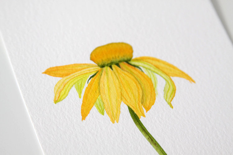 Watercolor yellow coneflower my giant strawberry watercolor yellow coneflower mightylinksfo
