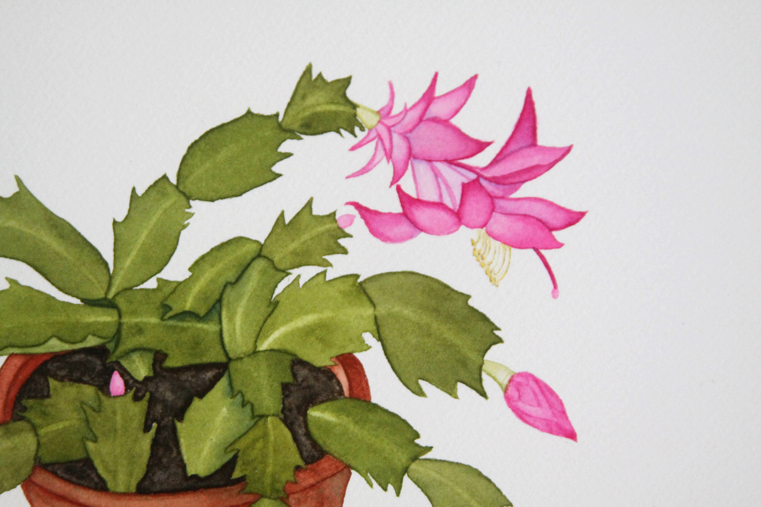 Watercolor Christmas Cactus In A Clay Pot
