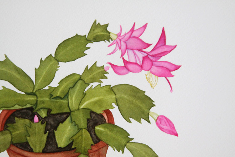 watercolor christmas cactus in a clay pot - Christmas Catus