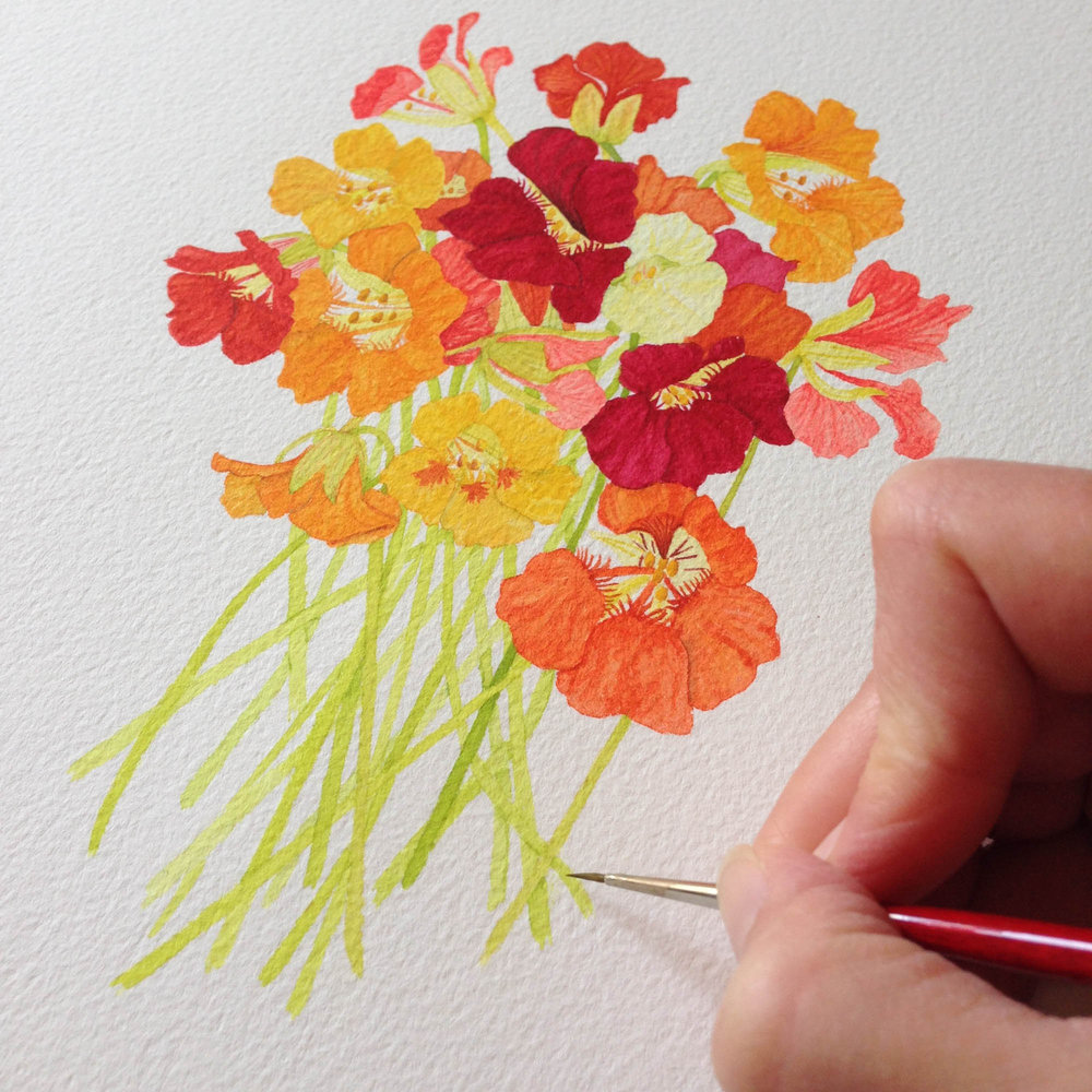 Watercolor Nasturtium Bunch by Anne Butera of My Giant Strawberry