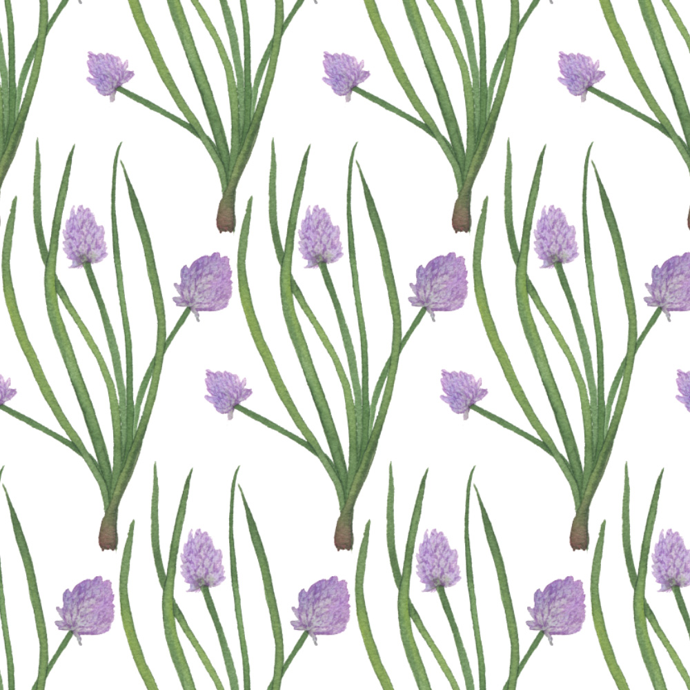 watercolor chives