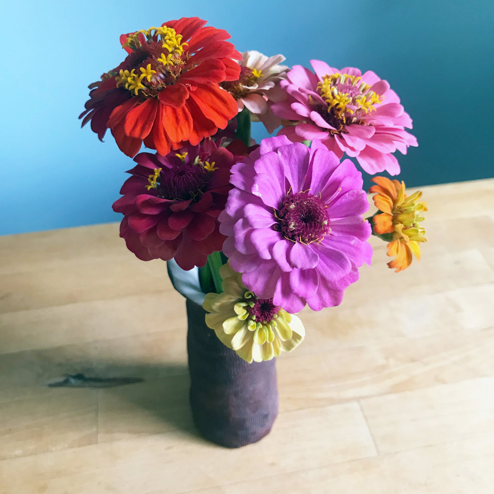 First of the Zinnias