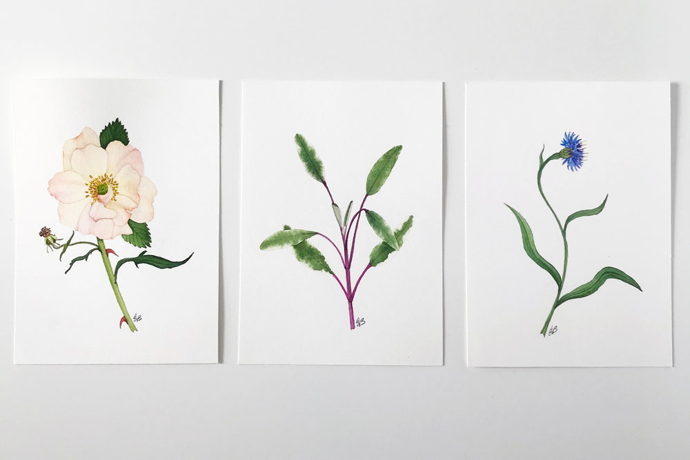New Garden-Inspired Paintings in My Shop