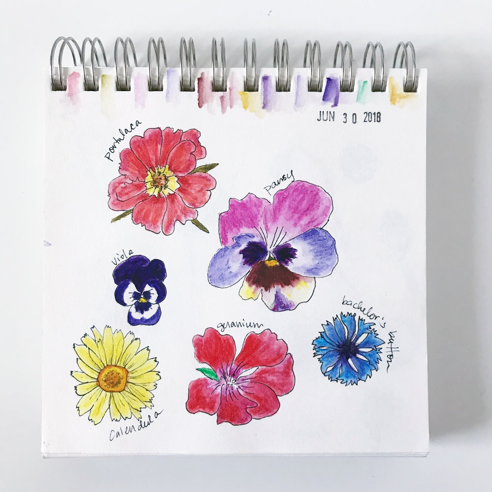 What's In Bloom? Trying Out Inktense Colored Pencils In My Sketchbook While Drawing What's Blooming In My Garden