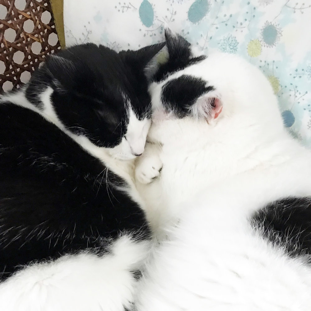 My Two Black and White Rescue Cats Are Often Snuggling on the Chair in My Studio