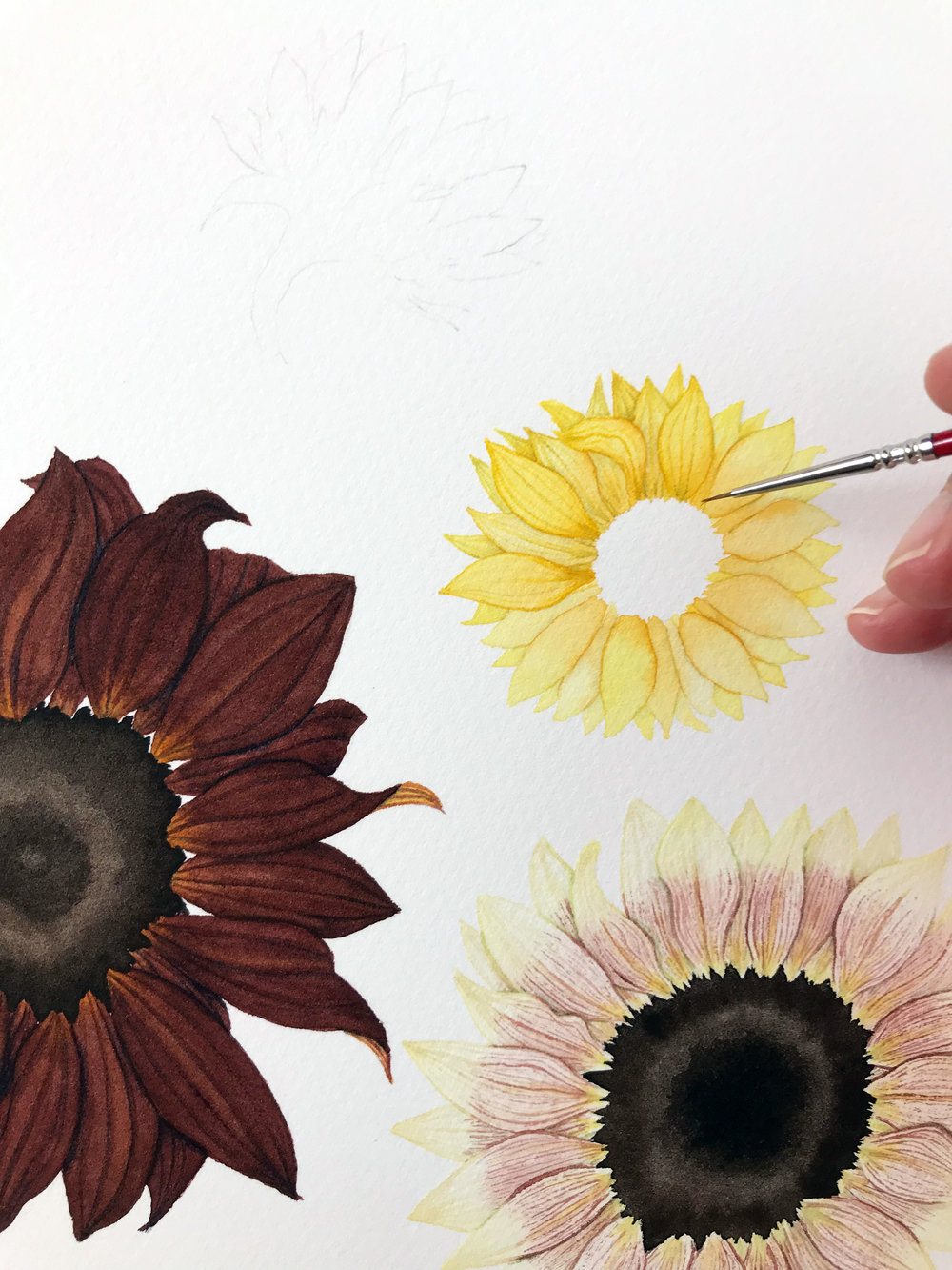 Notice the Difference Between the Petals That Have Gotten Details and Those That Have Not in this In-Progress Sunflower Watercolor Painting