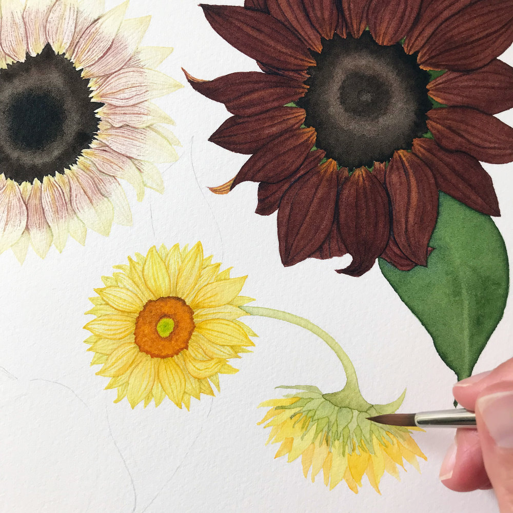 Painting Details on the Back of a Sunflower is Just as fun as Painting a Flower From the Front