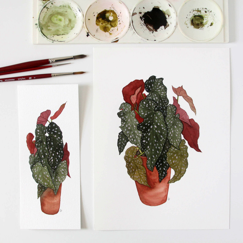 Two of My Watercolor Paintings of Angel Wing Begonia Plants