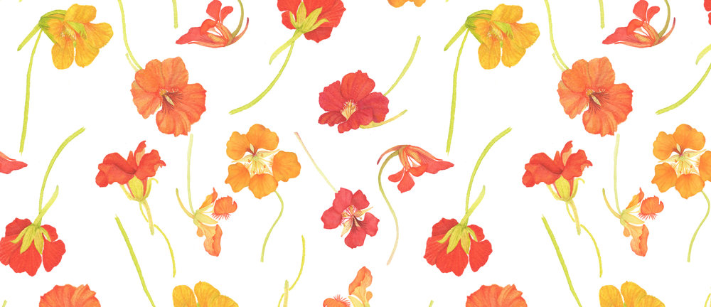 Watercolor Nasturtiums Fabric Design by Anne Butera