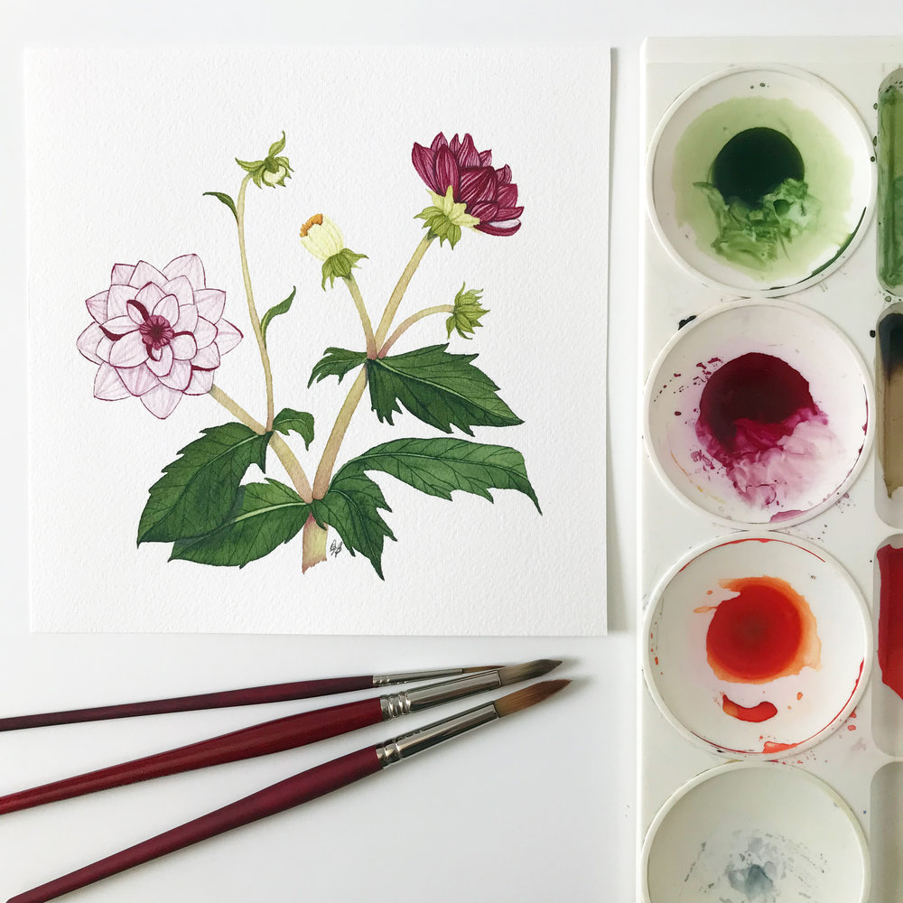 Watercolor Dahlia Botanical Painting by Anne Butera