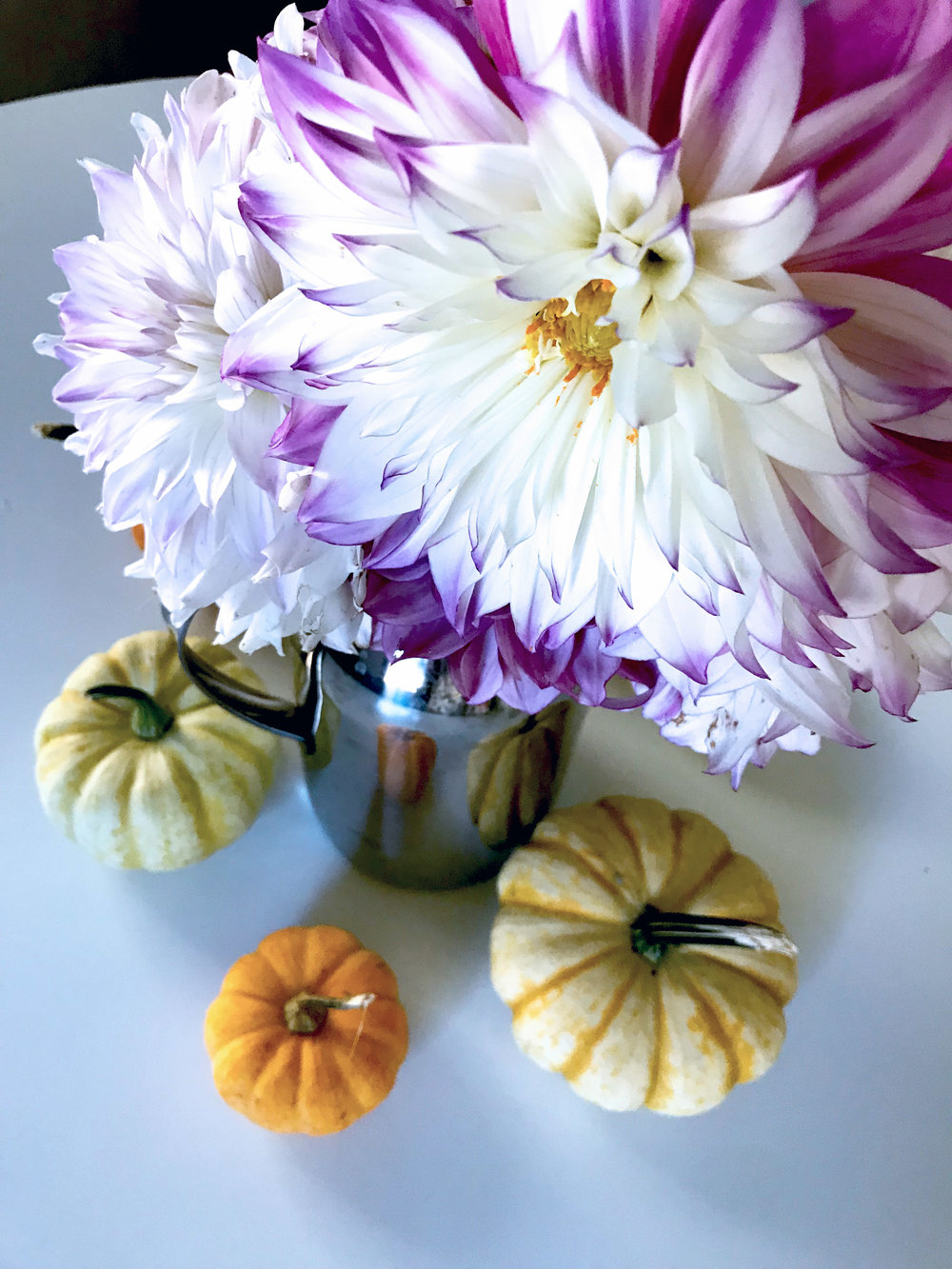 Dahlias from My Garden and Mini Pumpkins from My Mom's Garden on my Dining Room Table