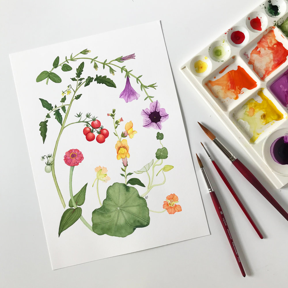 Summer Garden Harvest Watercolor Painting by Anne Butera