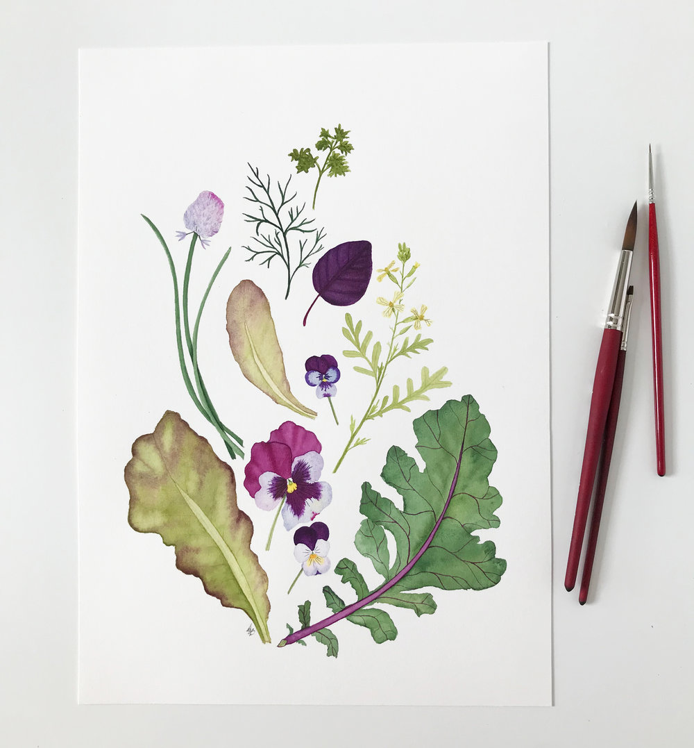 Garden Harvest Watercolor Painting by Anne Butera