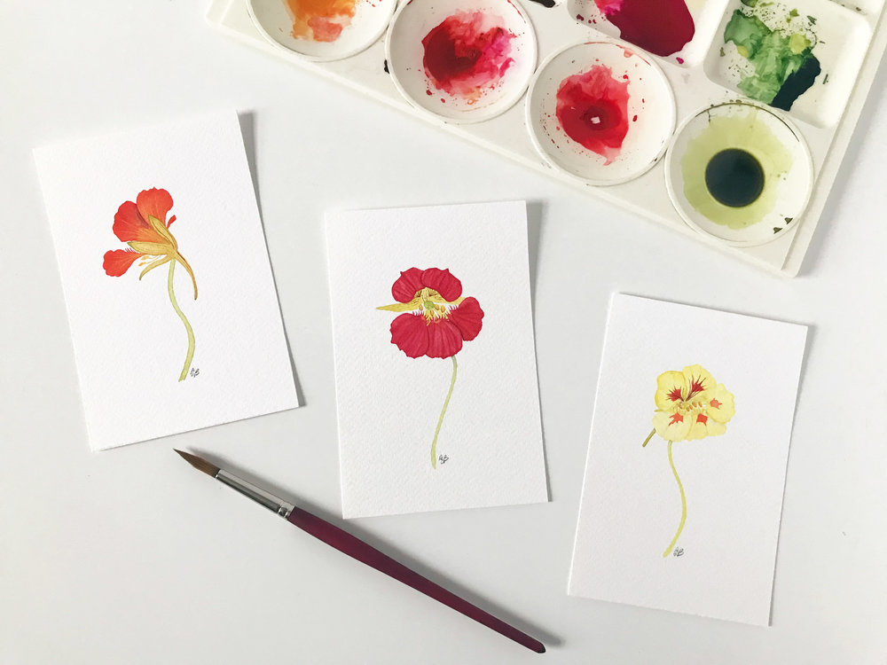 Three Nasturtium Paintings by Anne Butera