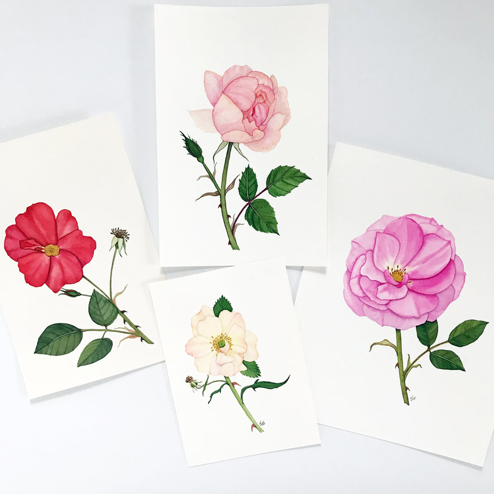 these watercolor roses were painted without live flowers as models — one in the spring and the others more recently
