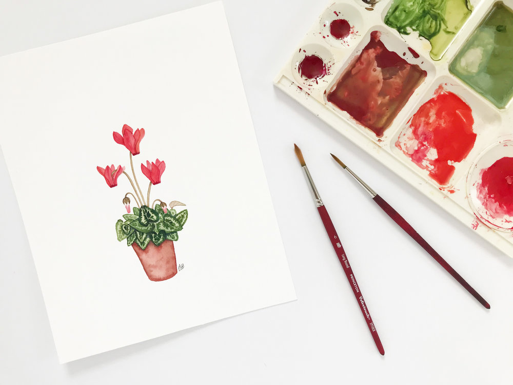 A Painting of a Cyclamen Plant that I Painted This Week