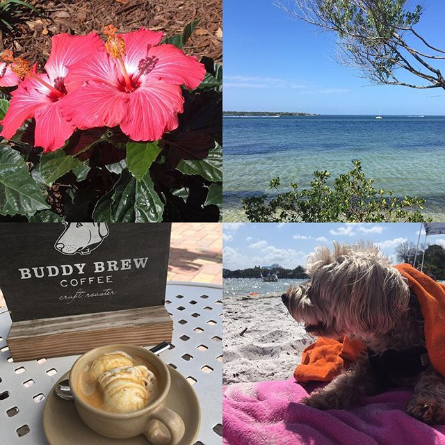 What a fun, lazy Sunday!  Clockwise from top left corner: 1. My garden 2. A trip to the dog beach  3. Roscoe, Kai's best bud 4. My first affogato! Amazing!  #sundayfunday #lovemylife #floridabeaches #saltlife #buddybrew #mustlovedogs