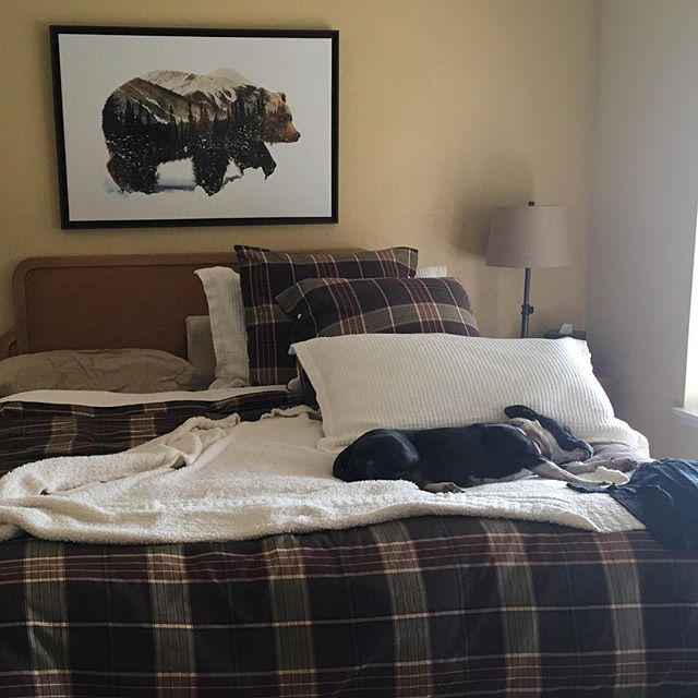 Kai loves the new bedroom!! - #dontbullymybreed #dogsofinstamedia #worldofcutepets #staffy #staffygrams #staffygram #lovemystaffy #lovemybully #pitbull