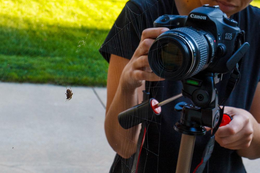 SpidersSS.jpg