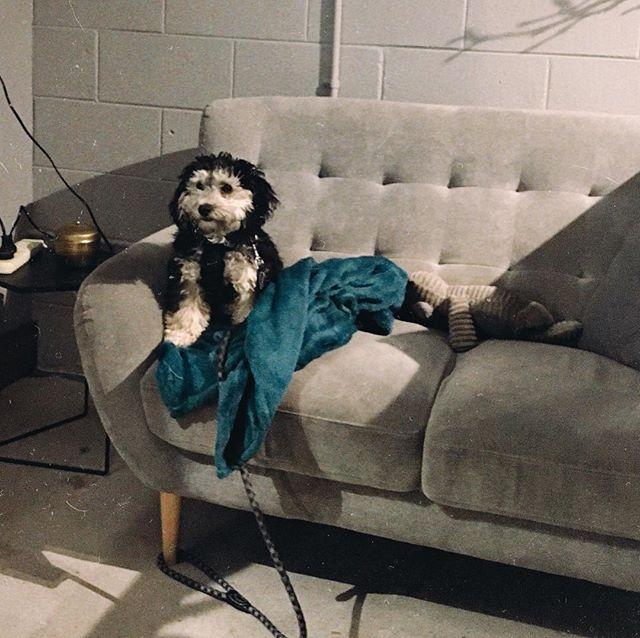 studio pup. — @messiah.studios