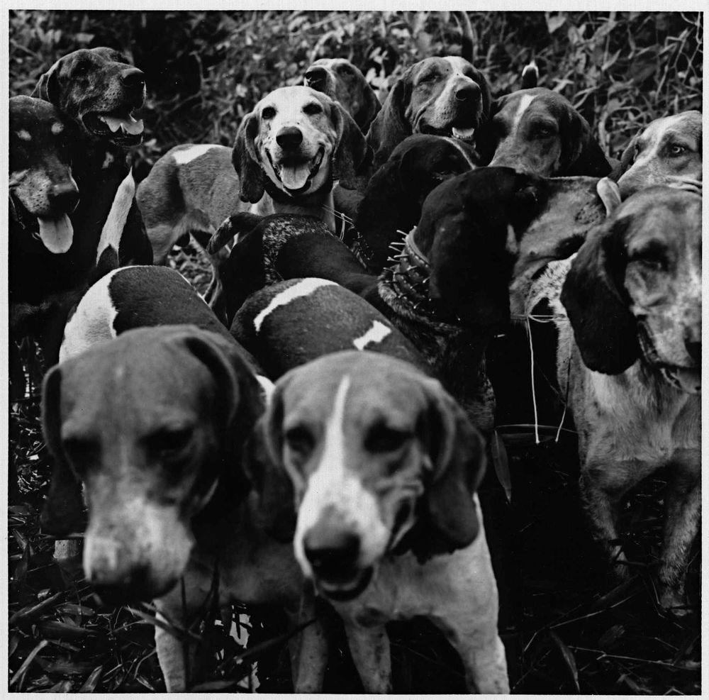 Cães.jpg