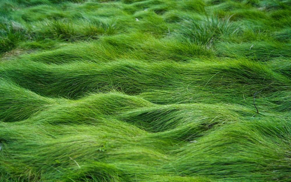green-nature_00250591.jpg