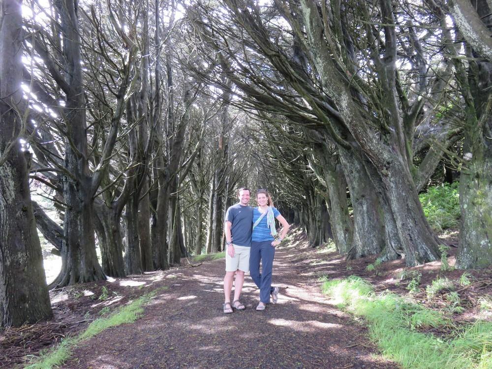 Otago peninsula walks & views